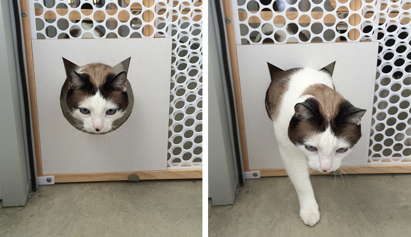cat gate test