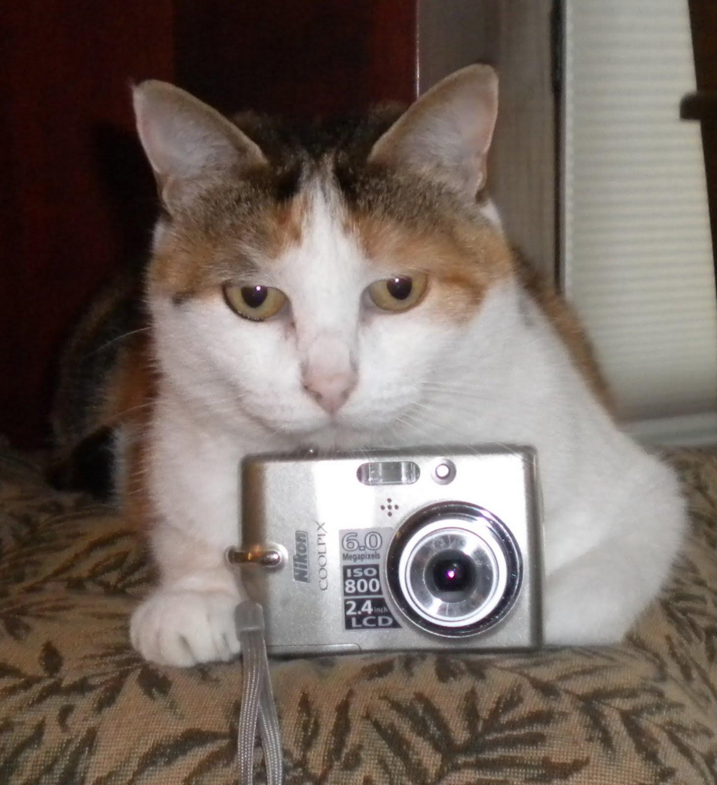 schrodinger s cat however i still hate schrodinger s cat