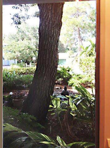 Oak and plants through window
