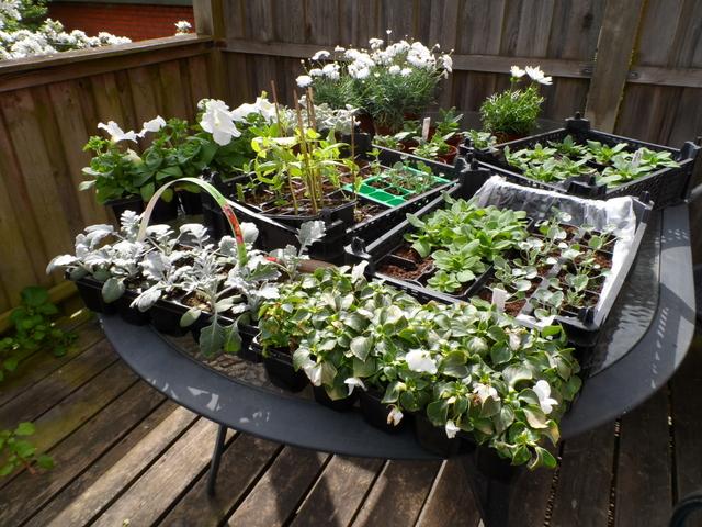 Heidis have: så blev det terrassens tur.....