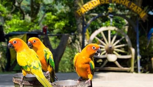 Paradise Park Farm Tour Koh Samui Thailand