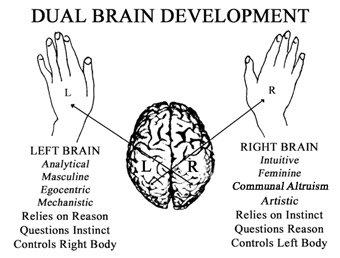 Brain Hemispheres6