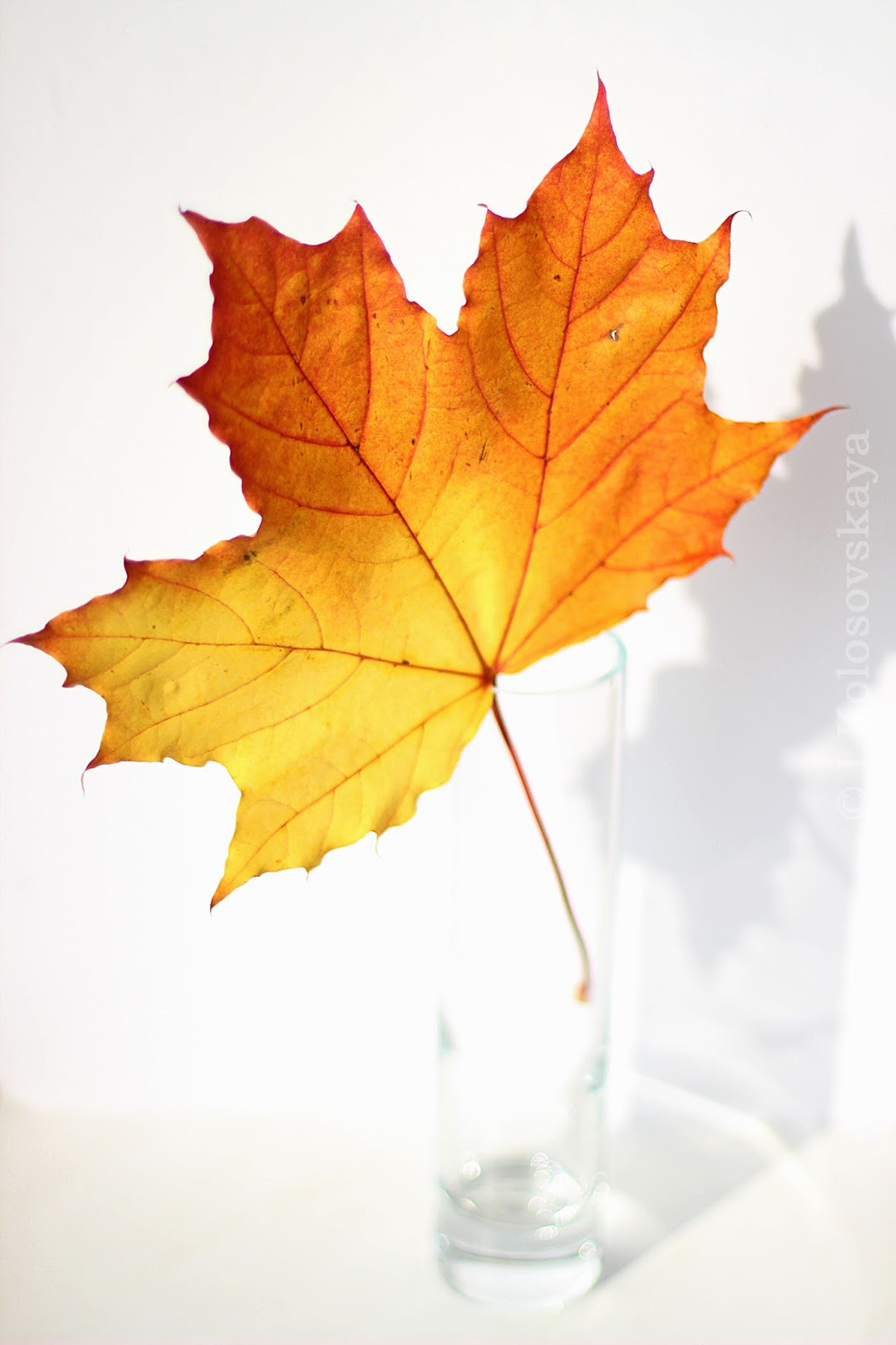 autumn leaves descriptive essay Model essay: descriptive a fall day the maple tree in my backyard with arcing branches and bright, red and orange leaves is something to see—especially in the fall.