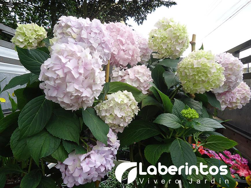 Dise o de jardines y plantas ornamentales quito for Jardines verticales quito ecuador