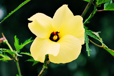 Flor silvestre color crema con espinas