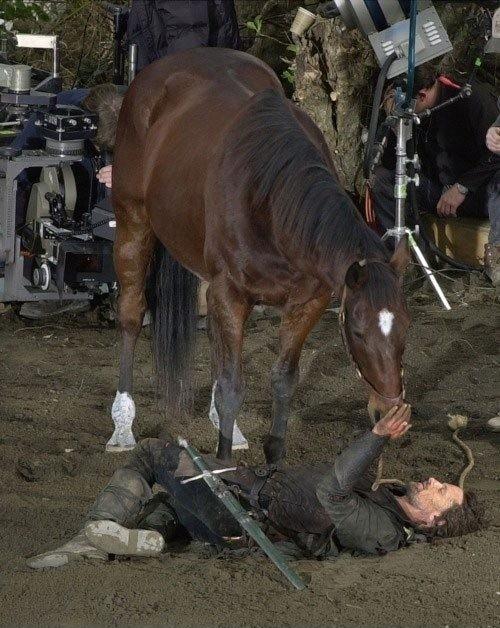 aragorn kauft Herr der Ringe Pferde
