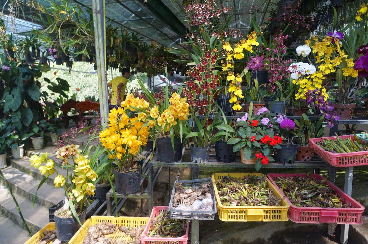 Орхидеи-Вьетнама