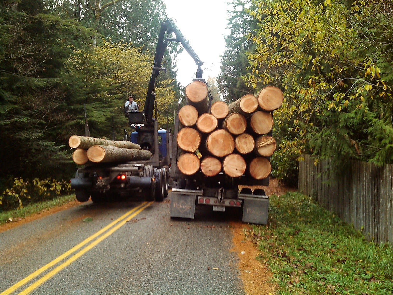 Tree Service Bellingham WA DigLynden's Website