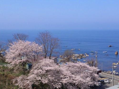 海と桜 ぜいたくなながめ