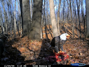 Bald Eagle Suprise