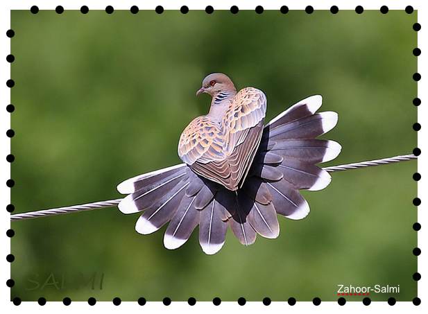 Rats Turtle Dove