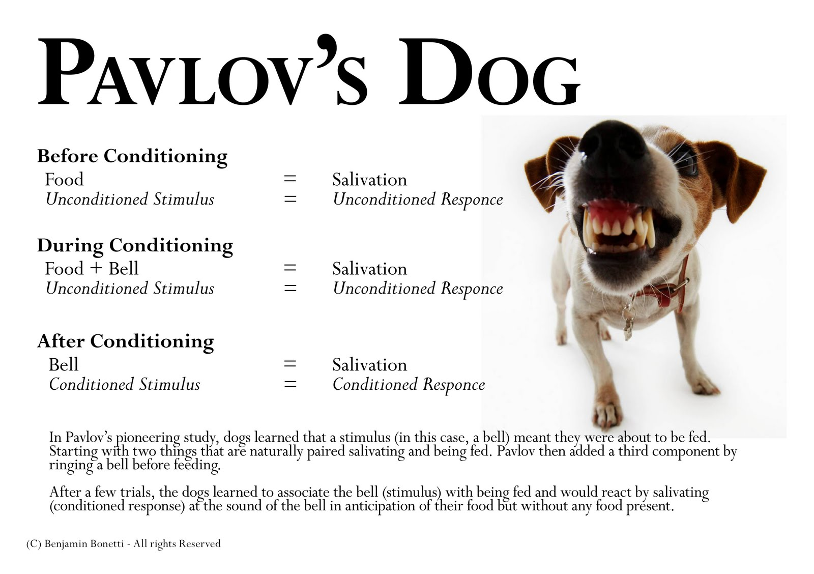 pavlovs dog Pavlov's - mouth watering good treats for dogs, even those with allergies to wheat and corn.
