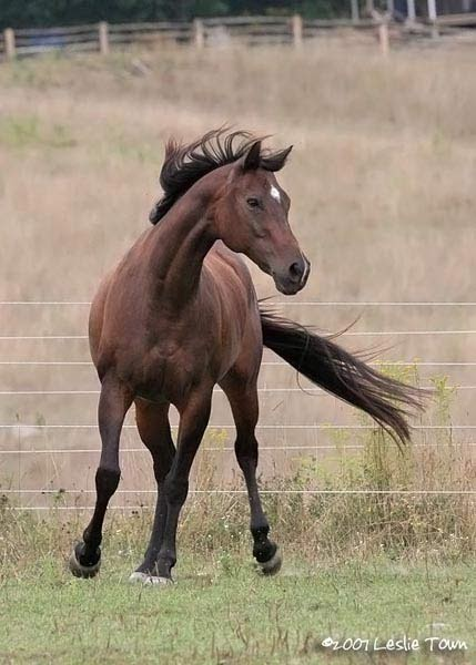 HD Animals Wallpapers: Brown Thoroughbred Horse Pictures Palomino Horse Running