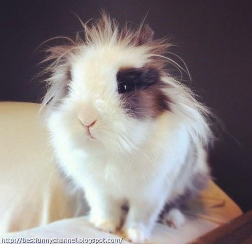 Cute fluffy bunny.
