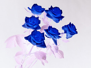 Real Blue Roses For Sale