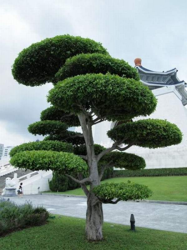 Topiary Art Work