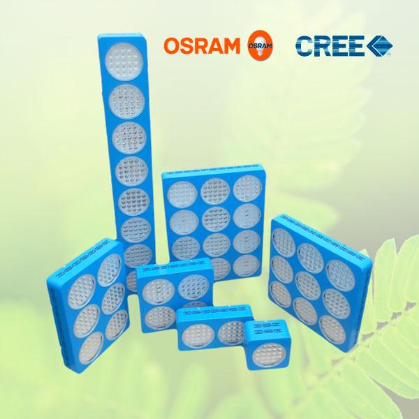 Culture Sous Led Eclairage Horticole Cree Et Osram Chanel Xg2