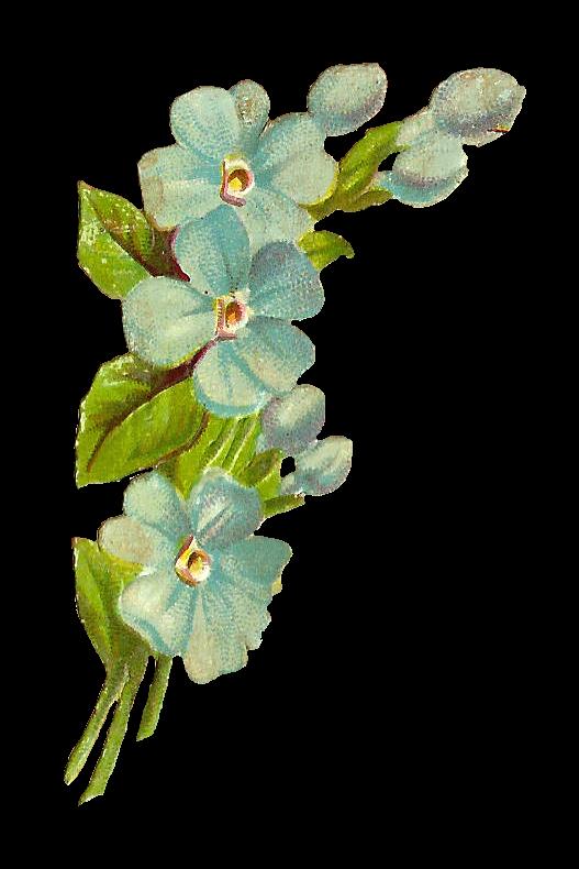 Antique Images Free Digital Scrap Flowers Blue Flower