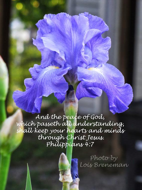 Blue Iris - Phil. 4:7