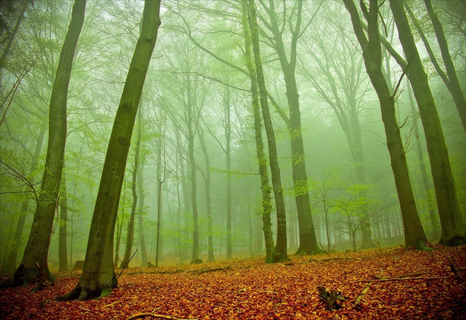 24 fotograf as de paisajes naturales del bosque rboles for Papel de pared paisajes