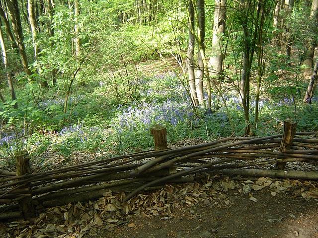 Jardin de la Sauvagine: Le sentier des jacinthes - Parc Marguerite ...