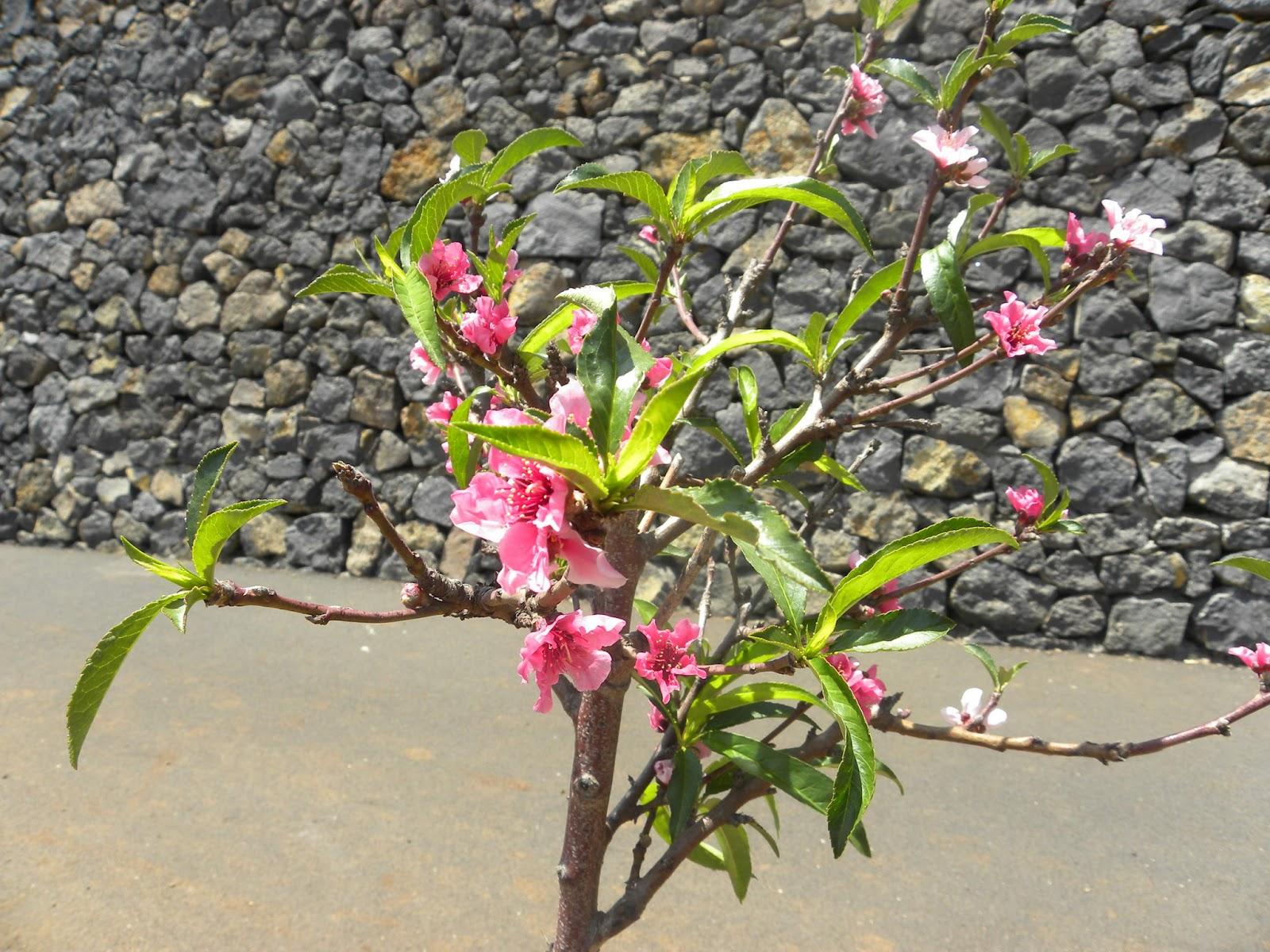 Miguel mederos mi querido pupitre bonitas flores en el for Asociacion de plantas en el huerto