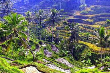 Foto Keindahan Wisata Alam Ubud Village Bali
