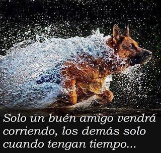 El perro,