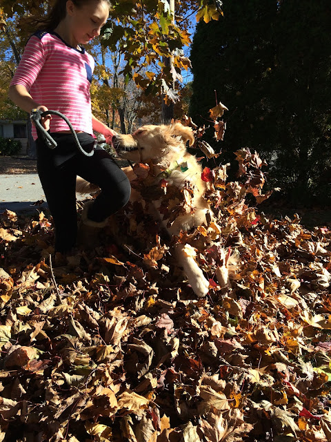 dog playing in leaves wordless wednesday