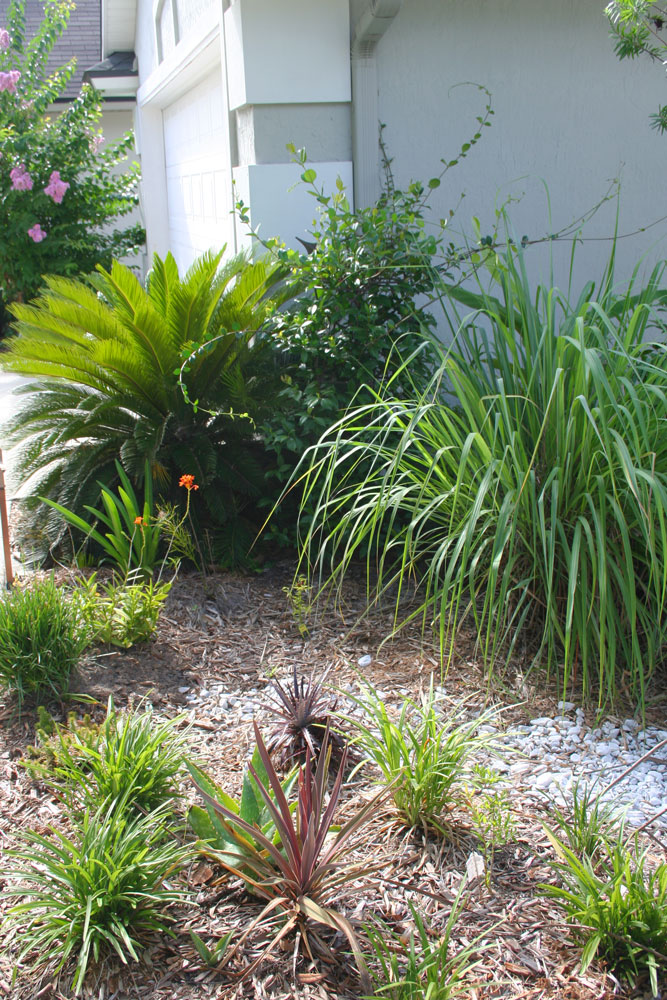 drought resistant garden. This Swale Does A Wonderful Job Catching Water So It Can Soak Into The Soil Slowly. Drought Resistant Garden