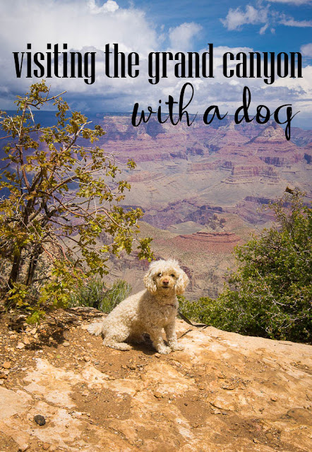 visiting the grand canyon with a dog