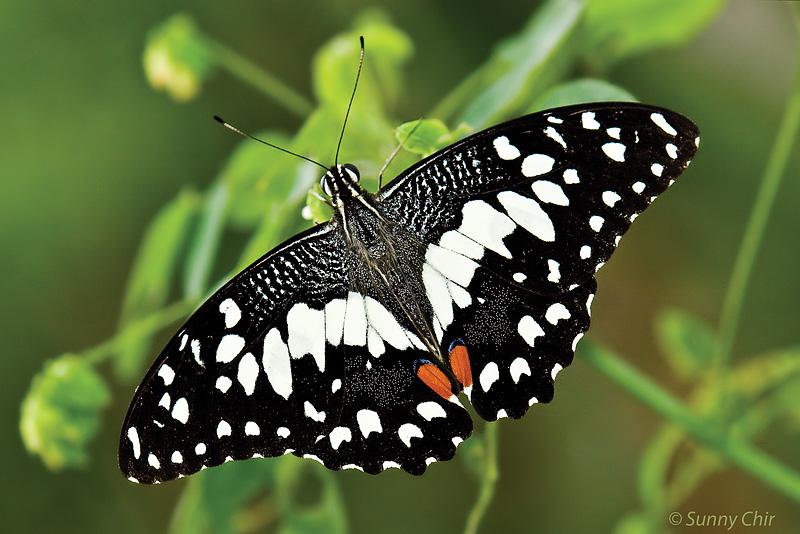 of Butterfly Behaviour...