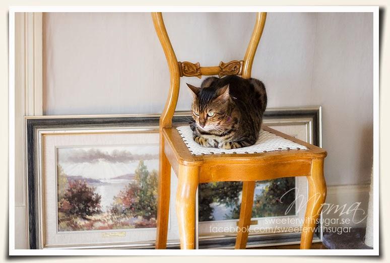 Allis the bengal cat, vintage paintings, chair