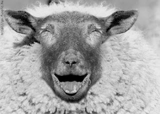 laughing+sheep_resize.jpg