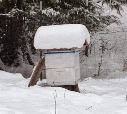 honey bee hive winter
