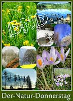 http://kreativ-im-rentnerdasein.blogspot.co.at/2015/04/guten-tag-und-los-gehts-start-von-dnd-1.html#comment-form