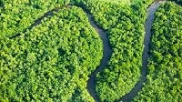 QUELLI DEL RAMO E QUELLI DELLA FORESTA: TU A CHI APPARTIENI?
