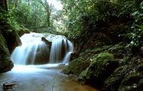 """اطلاق تسميات علي بعض القارات والمعالم الجغرافية: """"رئة الطبيعة"""" هي غابات الأمازون"""