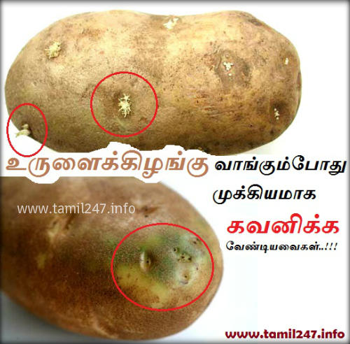udal arokiyam tips, arokiyam+tips, arokiyam tamil, Urulai kilangai vangum podhu mukkiyamaaga kavanikka vendiyavaigal, potato poison, solanine, glycoalkaloid poison, urulai kilangu vaangum murai, awareness post in tamil, Awareness, Arokiyam tips in tamil, Food Safety in Tamil