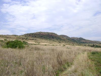 Widok na rezerwat Suikerbosrand