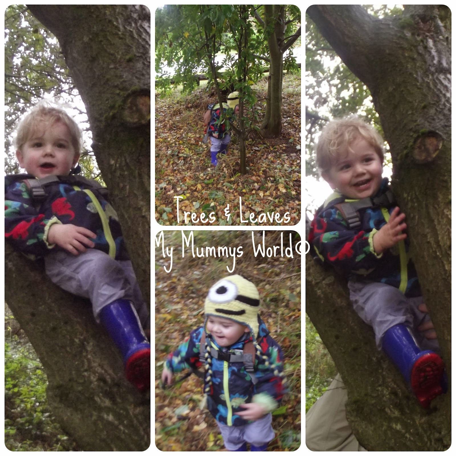 Exploring Trees & Leaves. My Mummys World©