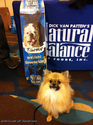#BabyPom at #BlogPaws last year winning a #Tillman Skateboard