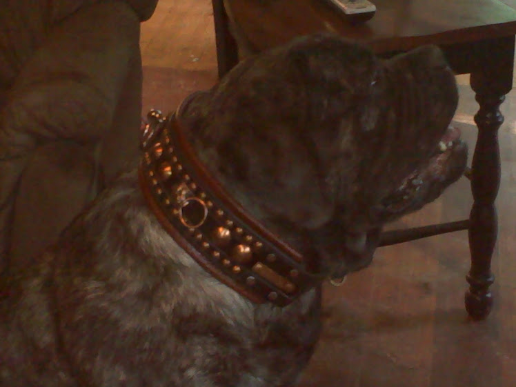 Copper Studded Collar