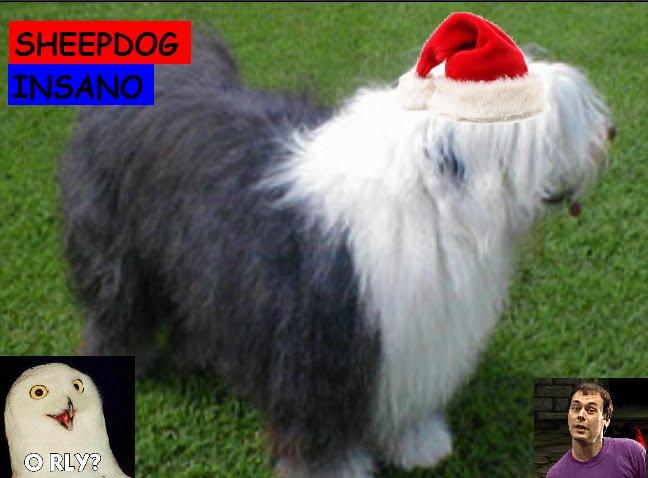Sheep Dog Insano
