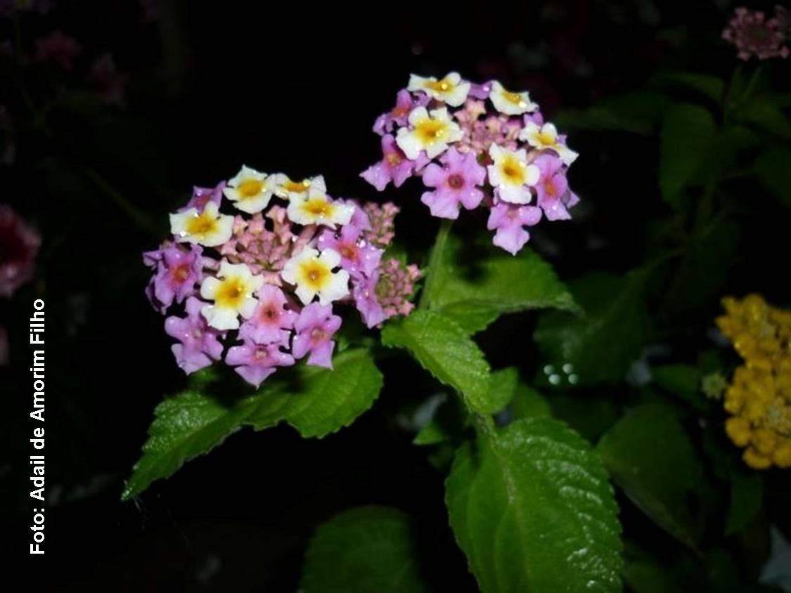 flores de jardim todo o ano Espaço Verde Flores coloridas alegram o