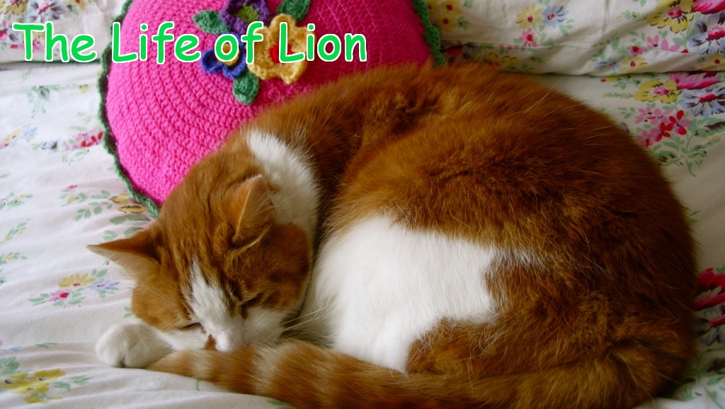 The Life of Lion