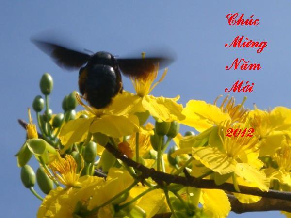 http://3.bp.blogspot.com/-KiKx_5_kW8k/Tv7WKuYJooI/AAAAAAAABCE/dLDEuHBOrAc/s1600/chucmungnammoi.JPG