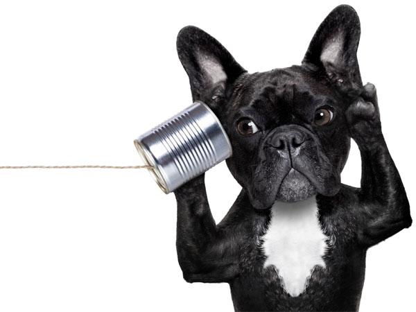 listening dog perro