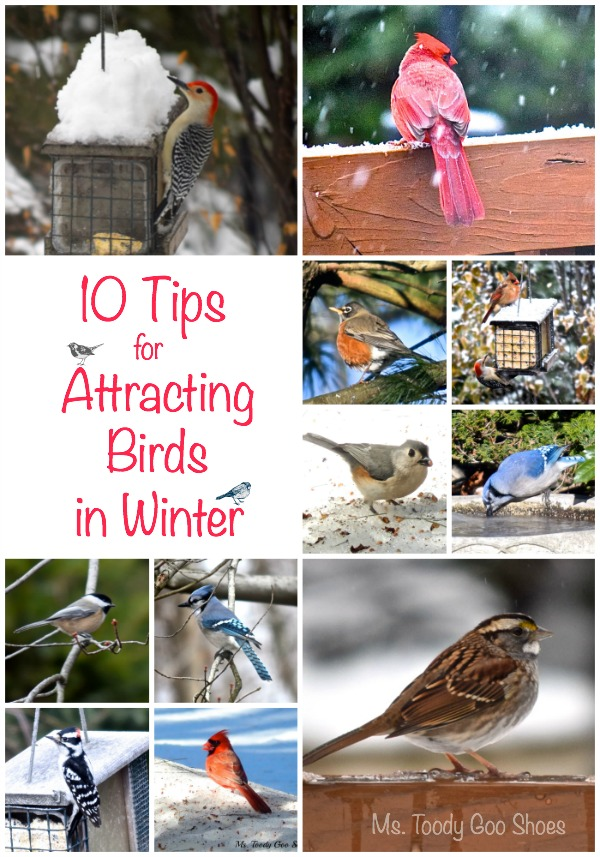 10 Tips For Attracting Birds in Winter - great ideas and fabulous pictures!