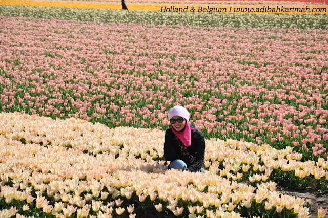 holiday to holland and belgium with premium beautiful at tulips farm keukenhof festival